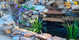 Water feature, pond, waterfall, with water plants