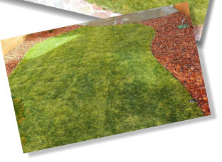 grass sod in back yard landscaping by Rising Sun Landscaping & Maintenance