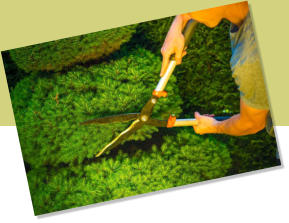 Commercial hedge trimming and bush trimming are services that improve customer impressions of your business.