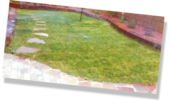 grass sod in back yard landscaping